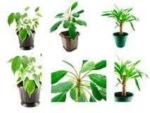 Plants isolated Royalty Free Stock Photo
