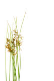 Plants isolated over white Royalty Free Stock Photos