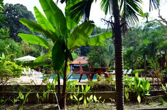 Plants and jungle at a resort in thailand Stock Images