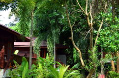 Plants and jungle at a resort in thailand Stock Photos
