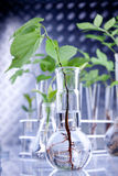 Plants in laboratory Royalty Free Stock Photo