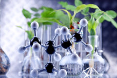 Plants in laboratory stock photography