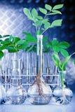 Plants in laboratory Stock Photo