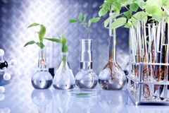 Plants in laboratory royalty free stock image