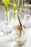 Plants  and laboratory Stock Image