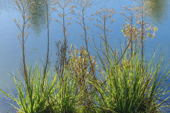 Plants and lake detail Royalty Free Stock Images
