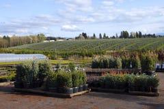 Plants & landscape. Royalty Free Stock Image