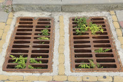 The plants through a lattice for sewage Royalty Free Stock Photo