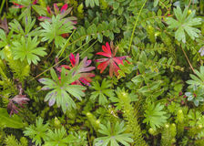 Plants and Leaves Background Royalty Free Stock Photography