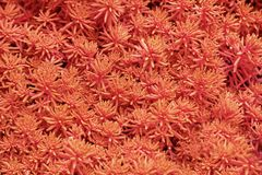Plants leaves texture in color of the year 2019  - Living Coral, pattern texture, wallpaper.  stock photo