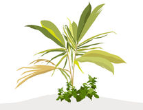 Plants & leaves-vector Stock Images