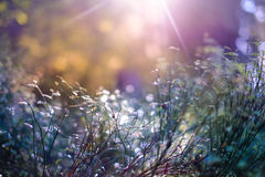 Plants and lens flare Royalty Free Stock Photos