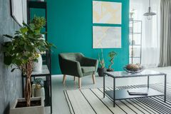 Plants in living room Royalty Free Stock Photo