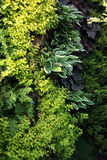 Plants for living walls. Wall on the shadow garden place planted with perennial plant for shady and humid enviroment. Very beautiful plants for shady areas Royalty Free Stock Images