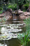 Plants and man-made waterfall in the pond Stock Photos
