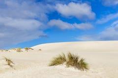 Plants manage to grow on the sand of the Little Sahara desert on Kangaroo Island, Southern Australia, with blue skies. Plants manage to grow on the sand of the royalty free stock photos