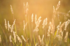 Plants on a meadow Royalty Free Stock Images