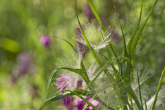 Plants in the Meadow Stock Photography