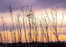 Plants at the meadow in sunset Stock Photo