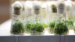 Plants in the Measuring Glass stock video footage