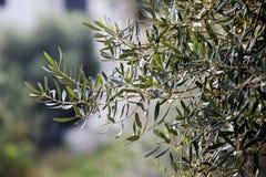 Plants at Mediterranean seaside stock photo
