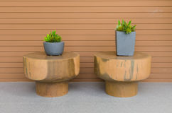 Plants in modern grey pot on round wood table Royalty Free Stock Photo