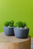 Plants in modern pot on wooden table Stock Images