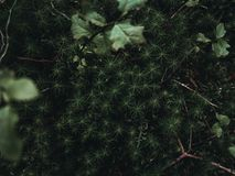 Plants in a moody nature environment Royalty Free Stock Photos