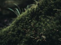 Plants in a moody nature environment Stock Photography