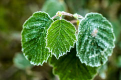 Plants in the morning covered with thaw. Plants in the autumn morning covered with thaw stock image