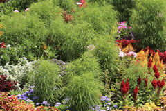 Plants of a motley decorative flowerbed Stock Images