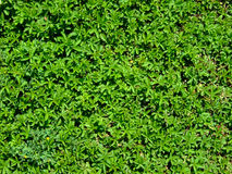 Plants Natural Texture Stock Image