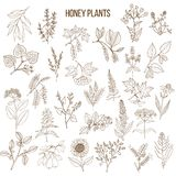 Plants - nectar sources for honey bees. Vector hand drawn set Royalty Free Stock Photography