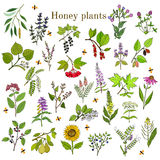Plants - nectar sources for honey bees. Vector hand drawn set Royalty Free Stock Images
