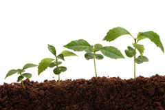 Plants-New life Royalty Free Stock Photography