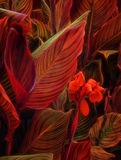 Plants at nighttime Royalty Free Stock Photography