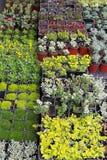 Plants nursery Stock Image