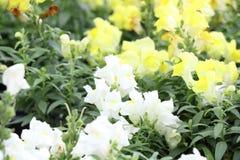 Flowers in a nursery Stock Image
