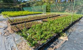 Plants nursery with various shrubs royalty free stock photo