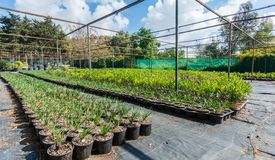 Plants nursery with various shrubs stock photography