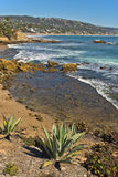 Plants and Ocean, Laguna Beach California Stock Photography