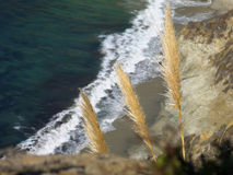 Plants on ocean shore on Big Sur Royalty Free Stock Image