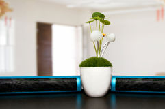 Plants on office desk Stock Photo