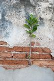Plants on the old bricks. Small plant growing on old brick Stock Photo