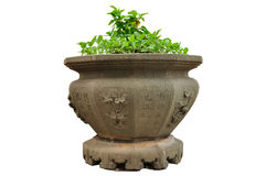 Plants in Old flowerpot isolated on white background, clipping path. Stock Image