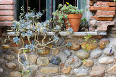 The plants at the old style window as background Stock Photos