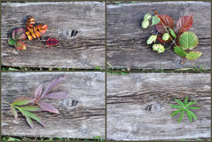 Plants on an old wooden board Royalty Free Stock Photography