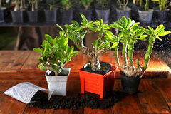 Plants in orange pot and soil royalty free stock image
