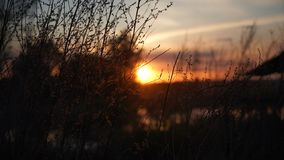 Plants at the July sunset stock photography