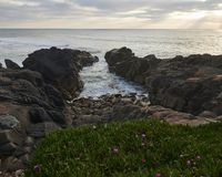 Plants over the rocks that form a small bay at the ocean royalty free stock image